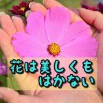 花は美しい