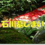 石川墓じまい