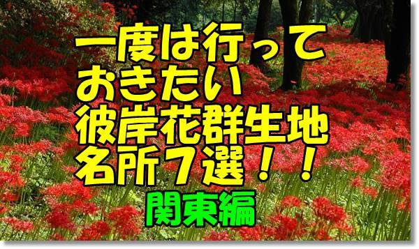 彼岸花名所関東編