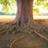 お墓の大きくなりすぎた植木を安全に処理する方法とは?