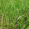 お墓の雑草対策7選!どれが一番おすすめで効果がある?