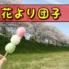 春彼岸のお供えはぼたもちより桜餅の方がしっくりくる?